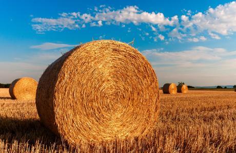 稻草, 留茬, 农业, 夏季, 稻草, 收获, 云彩