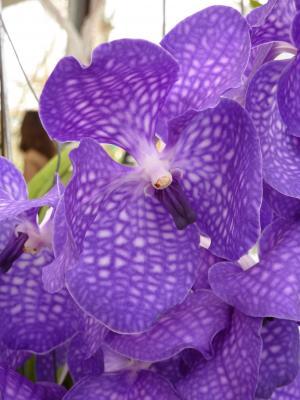 兰花, 紫色, 花, 美丽, 植物, 开花, 绽放