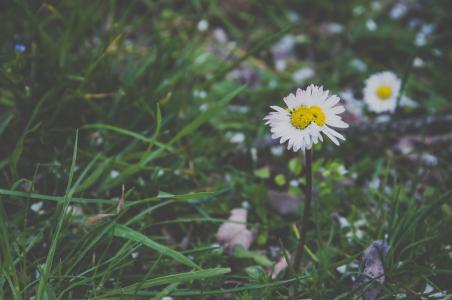 绿色, 草, 花, 自然, 户外, 草甸, 夏季