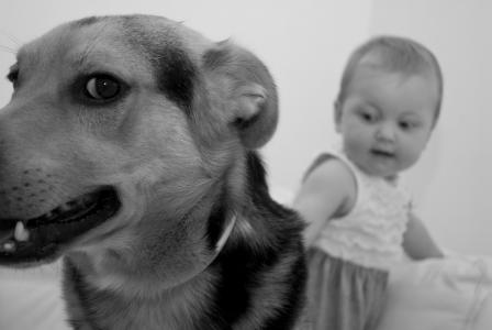 狗, 宾堡集团, 动物, 宠物, 野兽