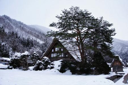 合掌村, 雪, 日本, 冬天, 山, 房子