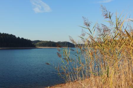 湖, 高高的草丛, celles 镇-侵扰, 法国, 景观
