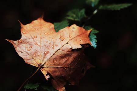 干, 棕色, 叶, 秋天, 杀除, 水滴, 更改