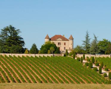 葡萄园, 城堡, 法国, 农业, 酒厂, 景观, 葡萄