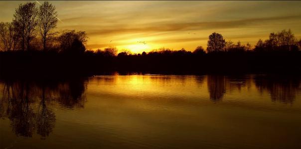 在 britzer 花园日落, 柏林, 升起的太阳, 云彩, 天空, 树木, 自然