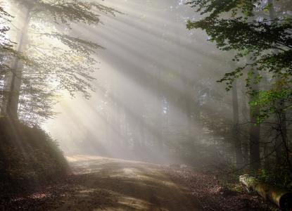 上升, 早上, 雾, 新光, 森林, morgenstimmung, 在清晨