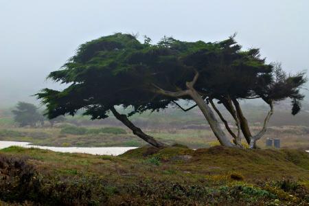 蒙特里, 树木, 自然, 景观, 海岸线, 加利福尼亚州, 美国