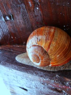 蜗牛, 海螺, 木材, 宏观, 软体动物, 动物, 自然