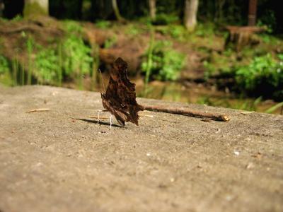蝴蝶, 自然, 宏观, 棕色, 野生动物, 翼, 夏季