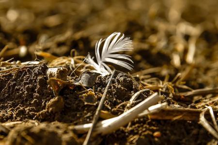 春天, 鸟羽, 字段, 景观, 土地, 地球, 可耕