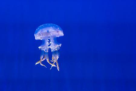 水族馆, 蓝色, 异国情调, 水母, 海洋生命, 发现, 游泳