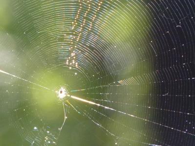 蜘蛛网, 网络, 蜘蛛, 太阳, 关闭, 自然, 昆虫