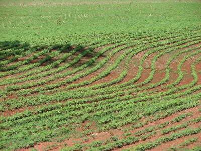 人工林, 大豆, 种植, 谷物, 农场, 塞拉多, 巴西