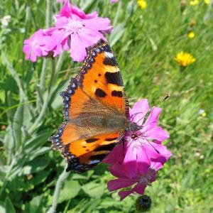 昆虫, 宏观, 自然, 蝴蝶, 花, 山