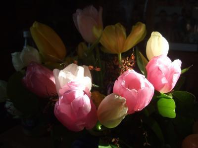 郁金香, 花束, 斯特劳斯, 春天, 红色, 粉色, 带红色