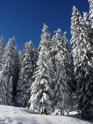 树木, 插图, 景观, 冬天, 冷杉, 自然, 森林