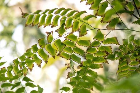 绿色, 叶子, 热带, 关闭, 宏观, 详细, 光