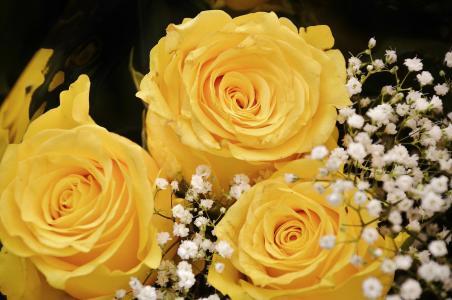 玫瑰, 花, 开花, 黄色, 花