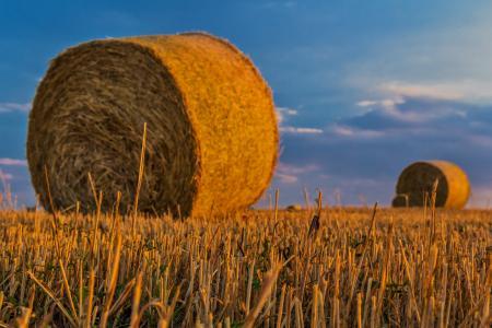 贝尔, 稻草, 农业, 收获, 乡村景观, 可耕种的土地, 谷物