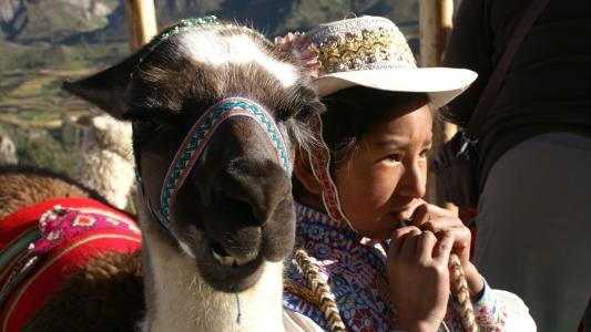 儿童, 喇嘛, 秘鲁, 人, 文化, 户外