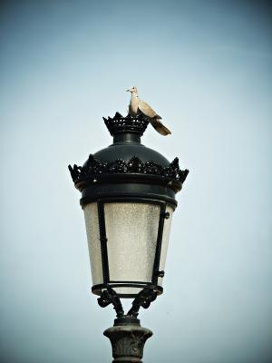 斑鸠, 街上的路灯, 天空, 鸟, 休息, 鸽子, 和平