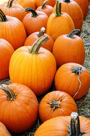 橙色, 南瓜, 秋天, 假日, 秋天, 万圣节, 感恩节