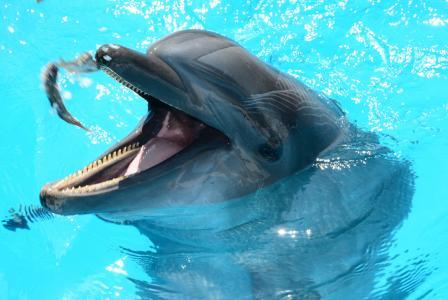 海豚, 海洋生命, 水中鱼, 海洋, 鱼, 哺乳动物, 显示