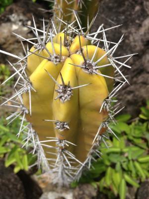 花, 热带, 瓜德罗普岛, 奇葩, 植物学, 花园, 加勒比海