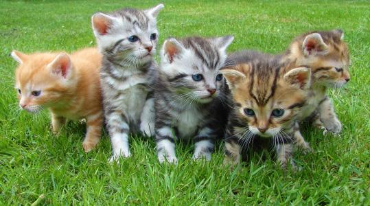 小猫, 猫, 猫的小狗, 高峰, 浮法, 小猫, 招财猫