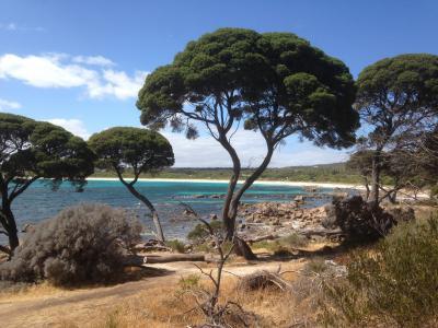 澳大利亚, 自然, 树, 海, 海滩, 景观, 风景
