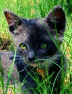 猫, 草, 绿色, 宠物, 猫科动物, 基蒂, 夏季