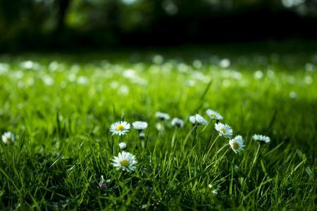 绽放, 开花, 模糊, 光明, 特写, 雏菊, 环境