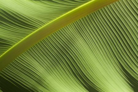 特写, 绿色, 叶, 模式, 植物, 纹理