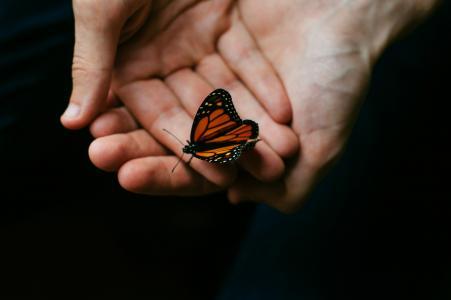 黑色, 橙色, 蝴蝶, 人, 人, 手, 举行