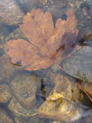 河, 水, 工作表, 湿法, 自然