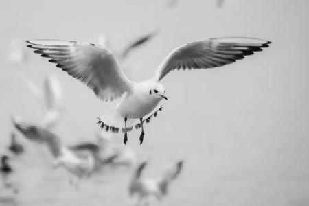 海鸥, 飞行, 鸟, 海滩, 瑞士, 湖, 白色