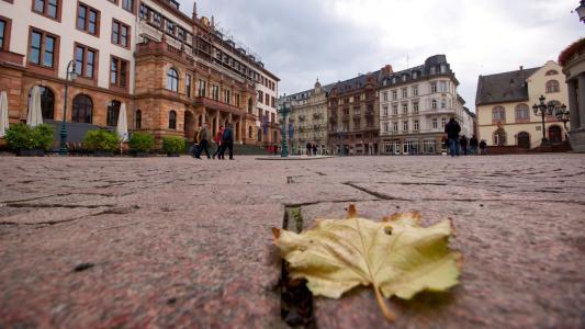 威斯巴登, 新的市政厅, 市场, 叶, 建筑, 大会堂, 叶子