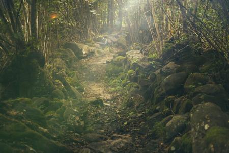 森林, 路径, 神秘, 岩石, 童话故事, 阳光, 绿色