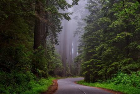 红杉树国家公园, 加利福尼亚州, hdr, 景观, 风景名胜, 黎明, 黎明