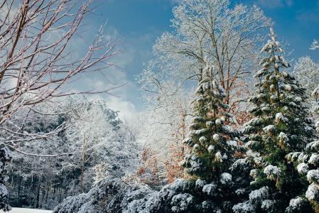 冬天, 景观, 风景名胜, 森林, 树木, 伍兹, 自然
