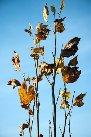 秋天, 叶子, 金色的秋天, 秋天的落叶, 自然, 金, 叶