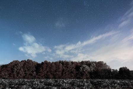 绿色, 树木, 白天, 时间, 云计算, 森林, 天空