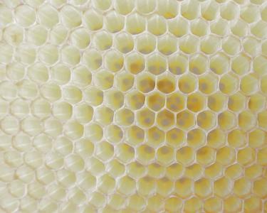 蜂窝状, 工作蜂, 单元格, 蜂蜜, 蜂蜡, 内六角, 蜜蜂