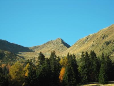 意大利, 景观, 风景名胜, 山脉, 森林, 树木, 伍兹