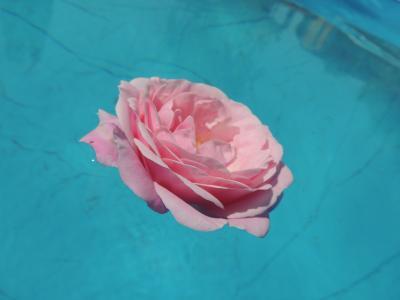上升, 水, 粉色, 花, 宏观, 粉红色的颜色, 没有人
