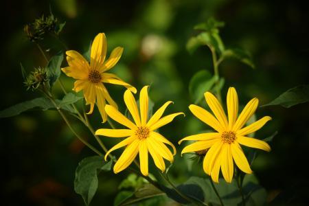 花, 自然, 黄色, 植物, 宏观, 花园, 黄色的花