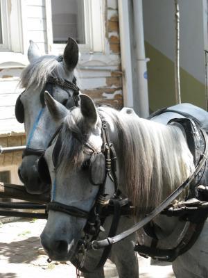 马, 车手, 吸引力, 有吸引力, 动物, 马鞍, 农场