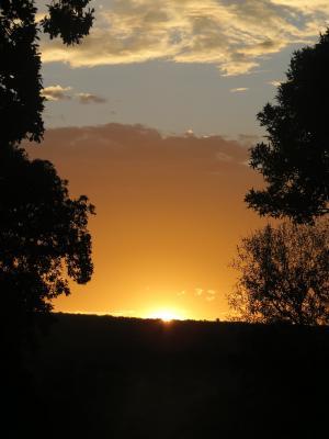 日落, 剪影, 南非, 橙色, 树木