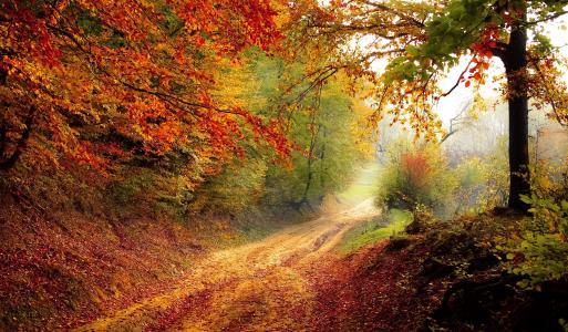 道路, 森林, 赛季, 秋天, 秋天, 景观, 自然