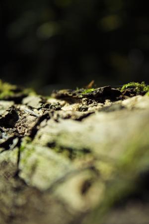 宏观, 青苔, 森林, 树, 树皮, 微生物, 森林垃圾